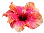 Flowers hawaii .png