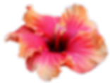 Hawaiian flowers orange colors  .png