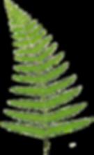 Hawaiian wedding green ferm