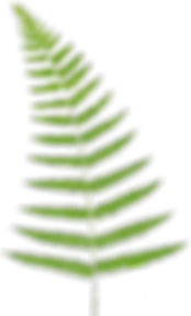 Fern-2-Leaping-Frog-Designs.png