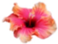 Aulani hotel flowers