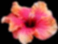 Hibiscuses flowers resort wedding