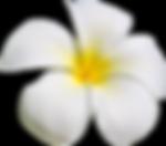 Hawaiian Wedding tour  flowers