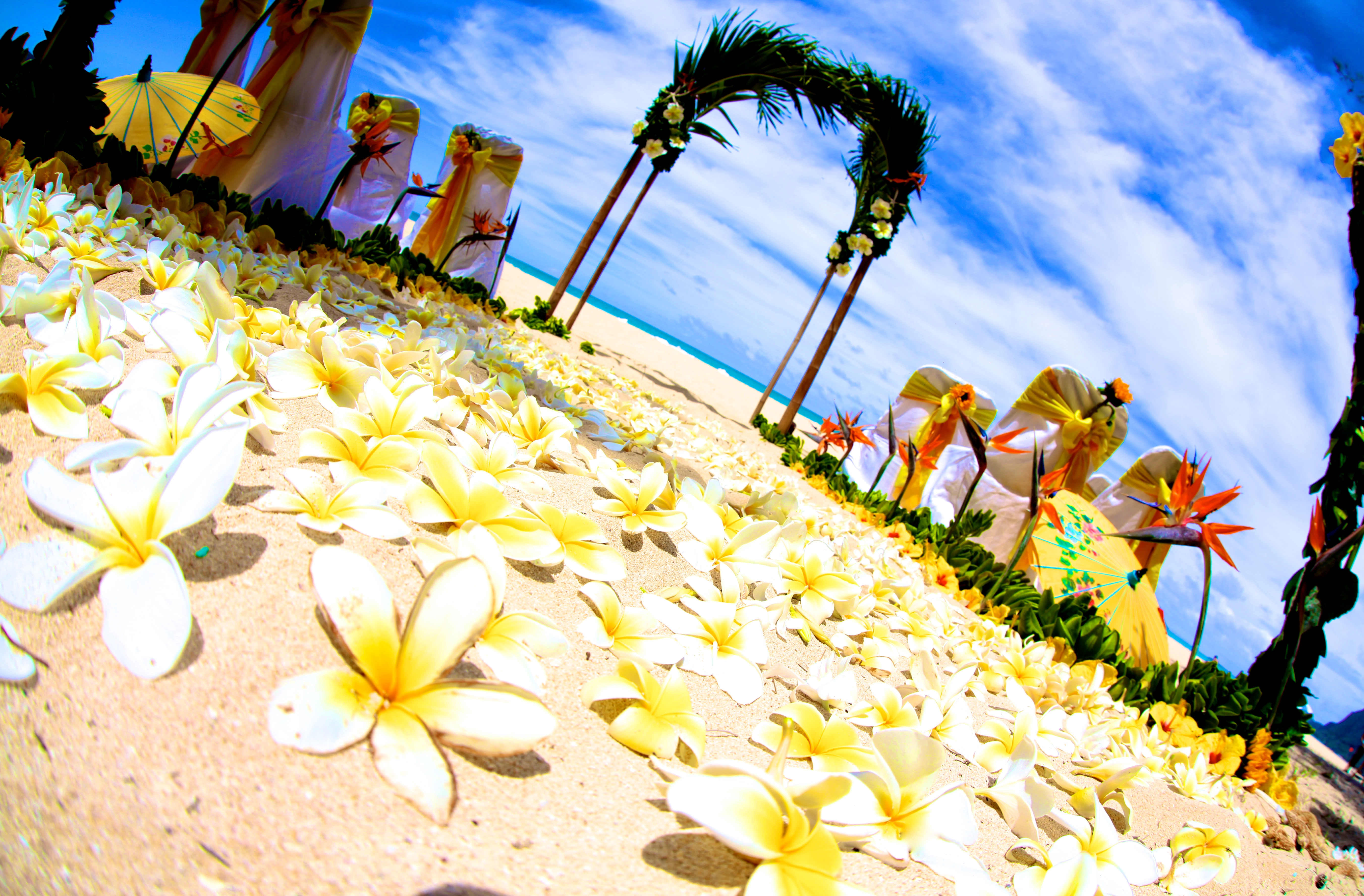 Beach wedding Hawaii 9