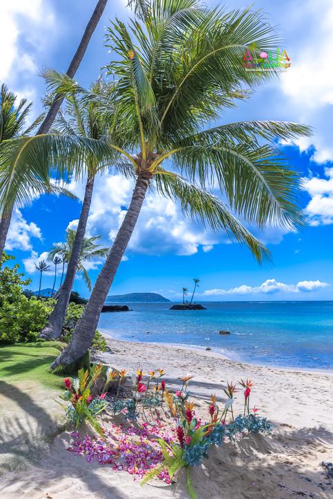 Oahu-Vowrenewal-Photography-4-7.jpg