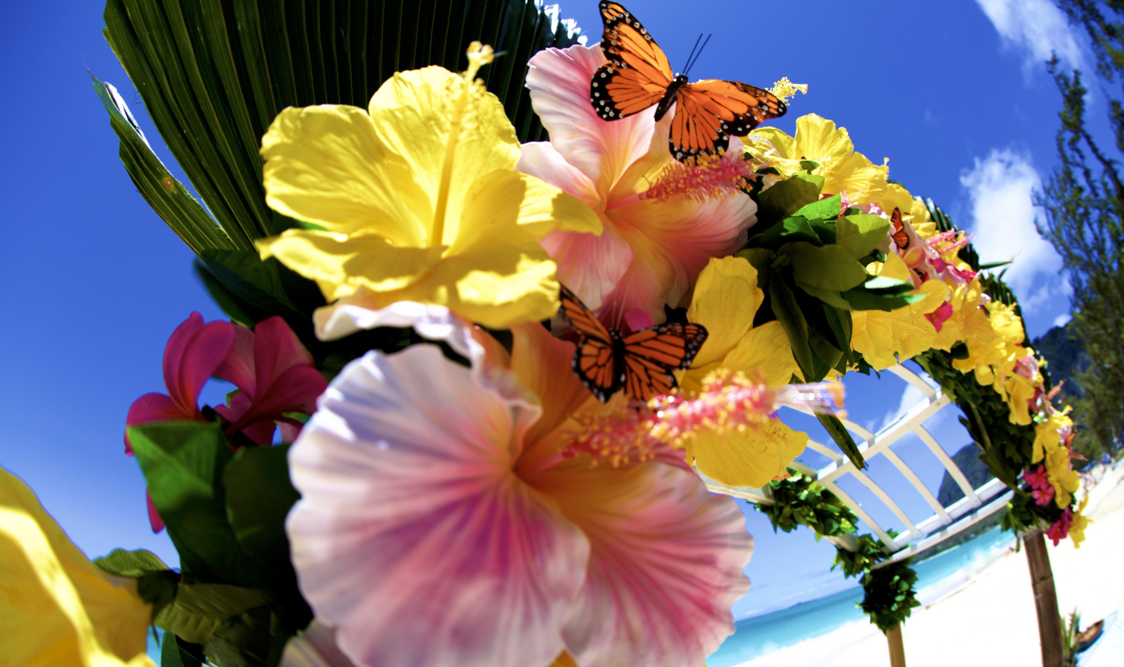 Hawaii weddings, elopements, and Hawaii vow renewals -3