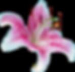 Tiger lily flowers - alohaislandweddings