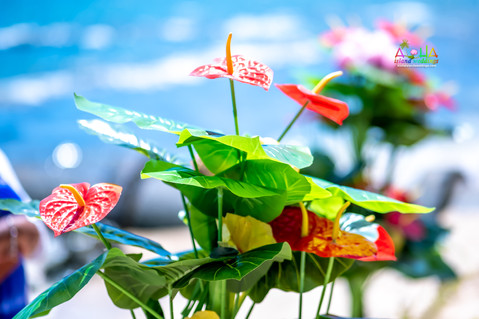Hawaii-wedding-ceremony-JC-1-10.jpg