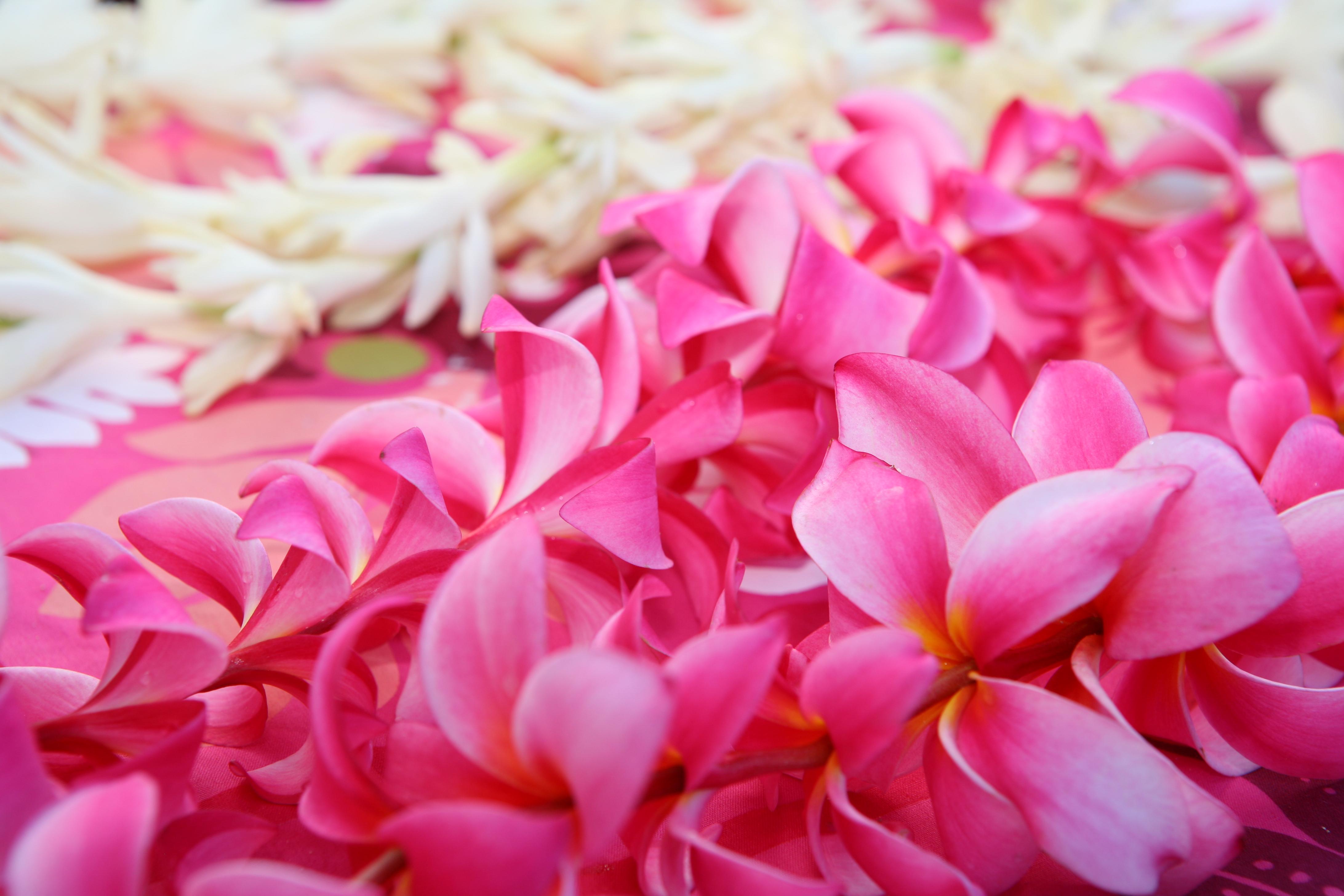 Weddings in Hawaii-12