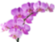 orchids.png