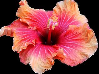Flowers hawaii - Japanese