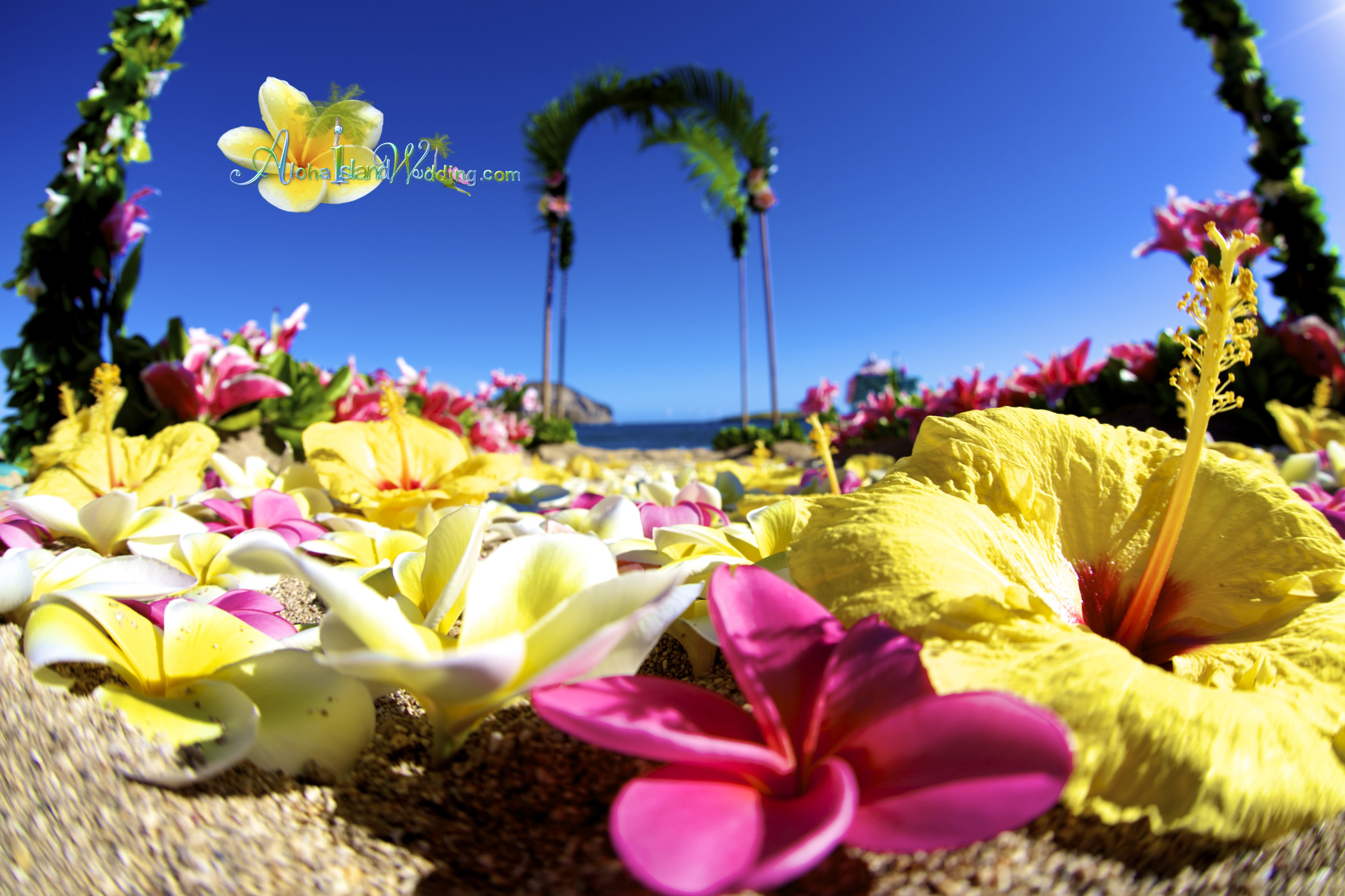 Hawaii Wedding Packages -12