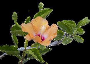 Hawaiian flowers in Hawaii