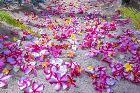 Oahu-Vowrenewal-Photography-4-6.jpg