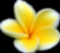Logo hair and make up in hawaii
