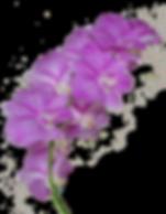 Orchids at Aulani disney hotel