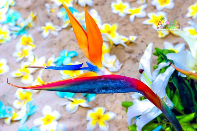 Hawaii wedding-J&R-wedding photos-111.jp
