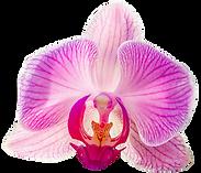 Orchids flowers - logo