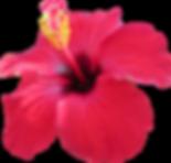 Hawaiian wedding package hibiscus