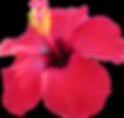 Hibiscus flowers wedding