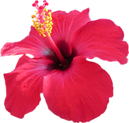 hibiscus weddng.png