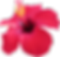 hibiscus-red.png