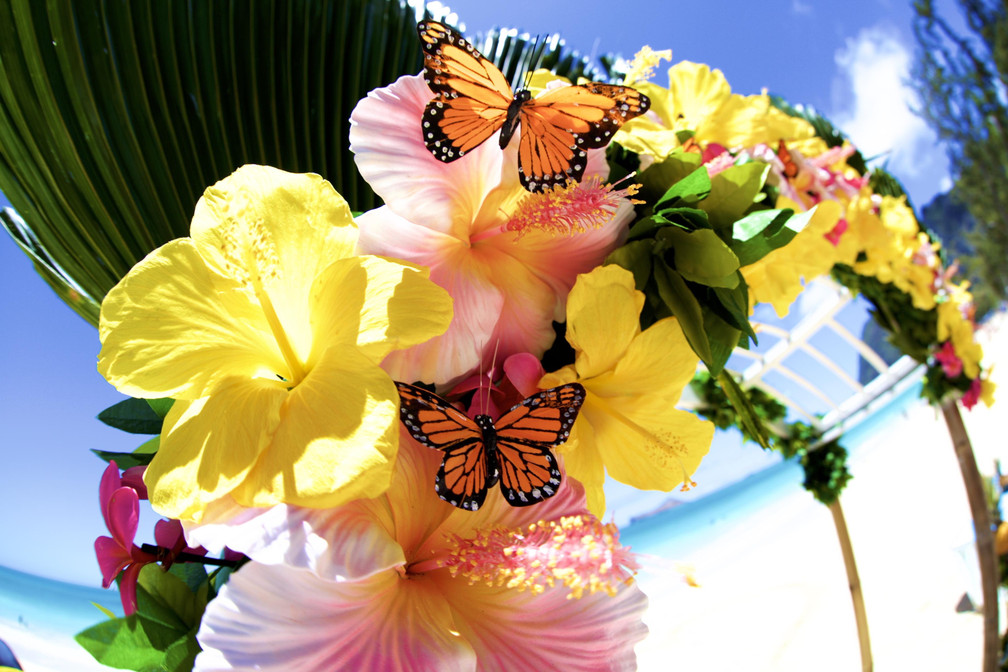 Hawaii weddings, elopements, and vow renewals -1