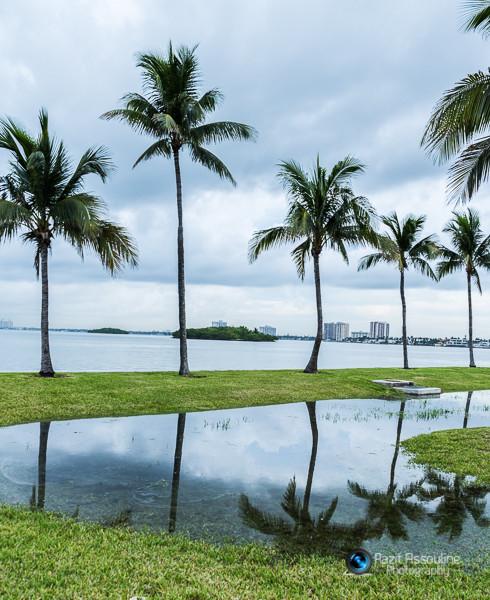 הדקלים  על החוף מיאמי, ארה״ב צילום פזית אסולין