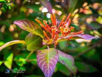 פרצים של צבע מהטבע