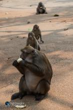 קופים בטבע