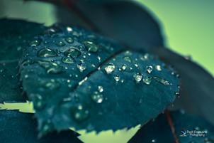 גשם ראשון, אויר נקי, לנשום