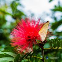 פרפר ופרח בהרמוניה