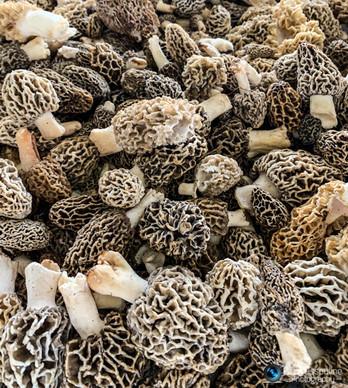 פטריות בשוק איכרים בארה״ב
