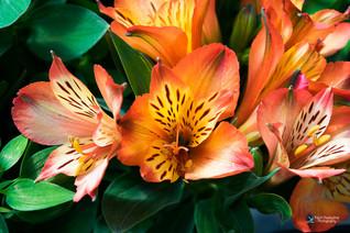 פרחים צבעוניים אש