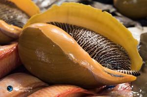 פירות ים