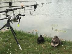 Canard et canne à pêche