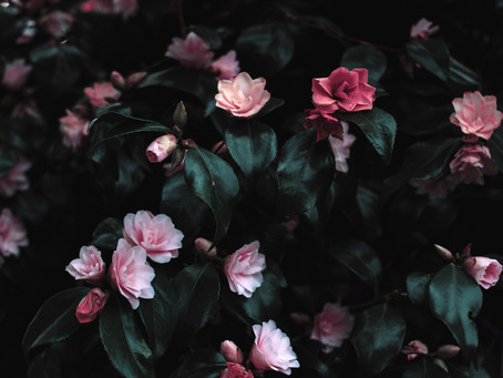 Why do humans find flowers beautiful?
