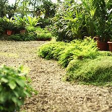Plant Nursery