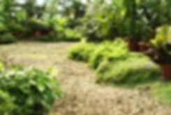 Nursery, greenhouse, japanese maples, maple, trees, acer palmatum, spruce, evergreens, colorado blue, norway, arborvitae