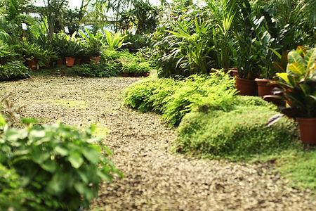 Pflanzenschule