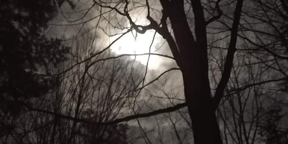 Snow Moon Woods Walk