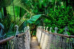Bornéo