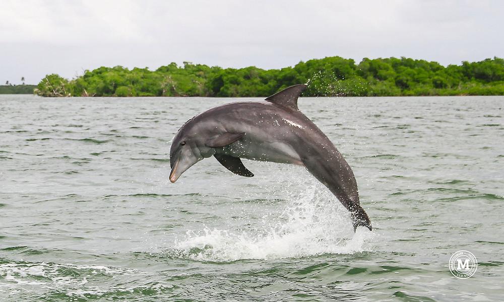 Mona-Deutschmann-Punta-Allen-Dolphin-1.red