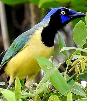 Observacion de aves Punta Laguna- Yucatan Mexico – tour con guia – aves - Naturaleza - Cultura - fotografia de naturaleza – comunidad maya – mono