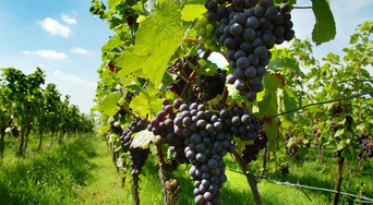 Décrouvrir les vignobles