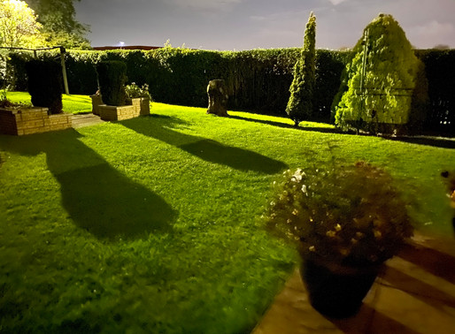 Night Time in Wor Garden