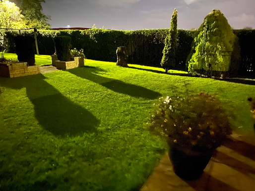 Night Time in Wor Garden