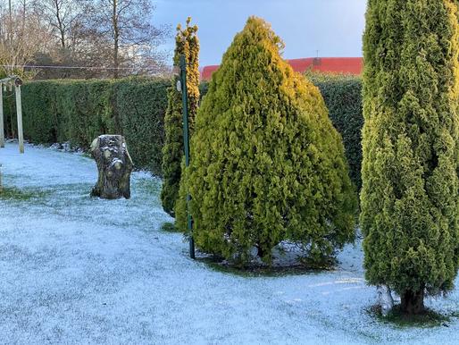 Snow in Wor Garden