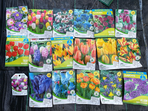 Late Spring Bulb Planting