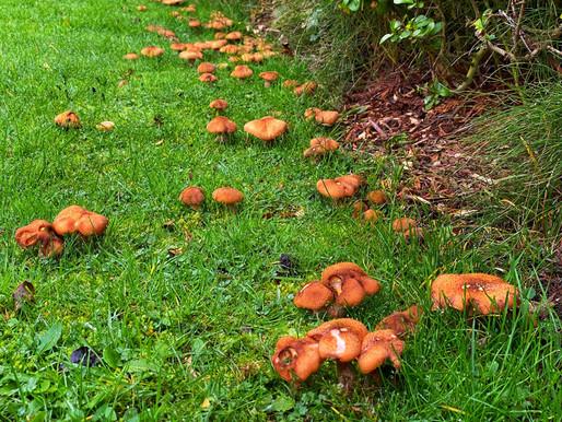 Mushroom Mayhem